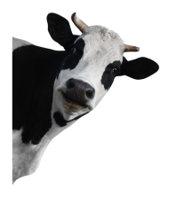 cow_PNG50632